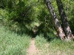 Cottonwood Canyon